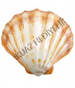 LYROPECTEN POLISHED 6 - TEKLİ