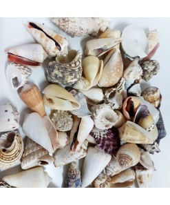 MIXED SHELLS